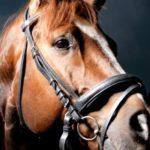 Лошадь по соннику