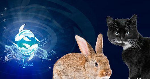 Кролик и кот 1987 год