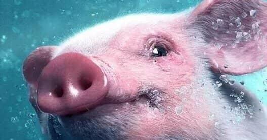 1983 год Водяной свиньи